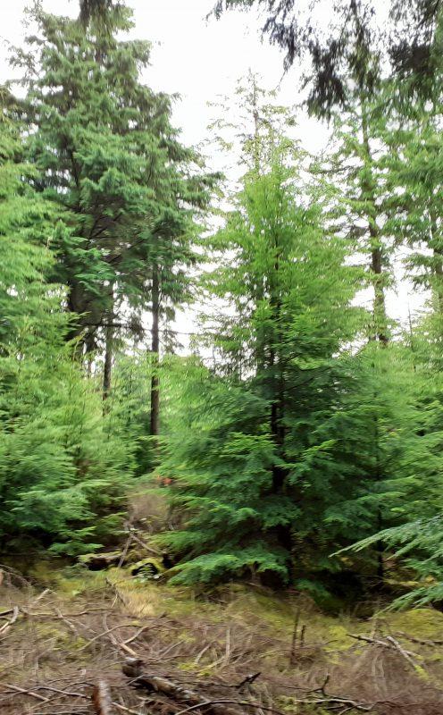 Forest Management
